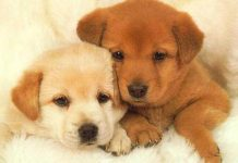 Puppies Wallpapers.jpg