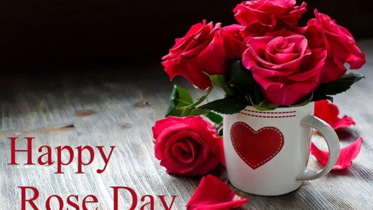 Happy Rose Day 2017 Image Wallpapers video Download