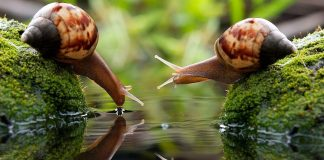 Snails Wallpapers.jpg