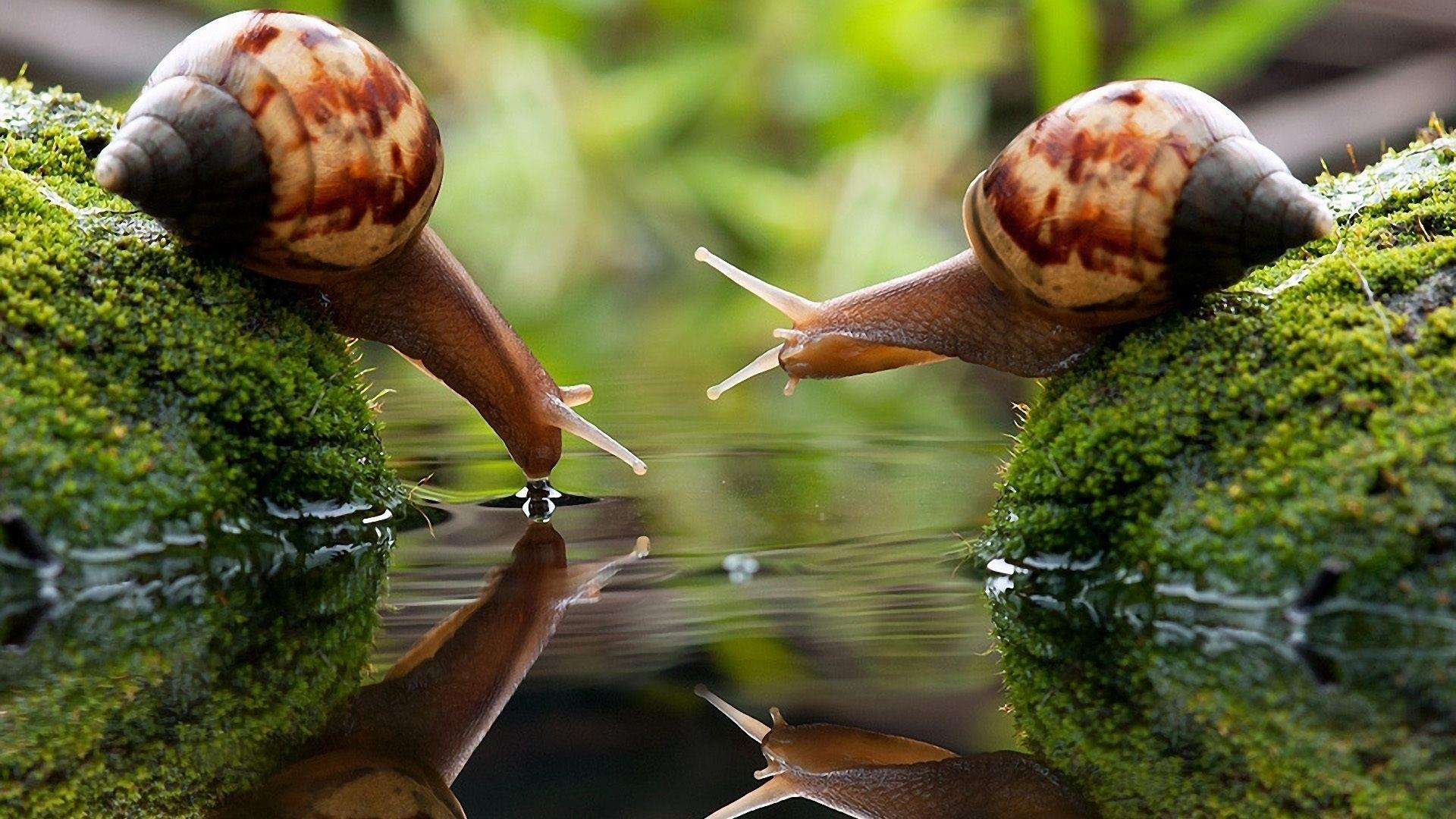 Two Snails Drinking Wallpapers