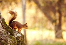 Squirrel Wallpapers.jpg