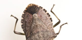 Stink Bugs Wallpapers.jpg