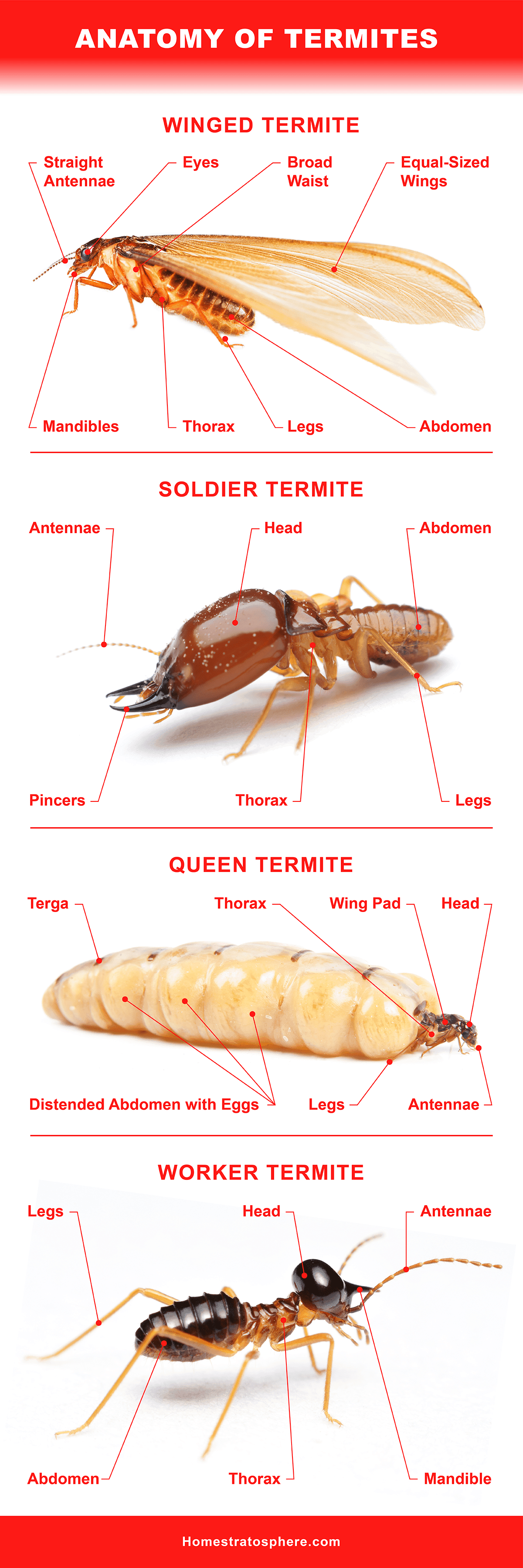 13 Different Types of Termites Eating Houses All Over the World