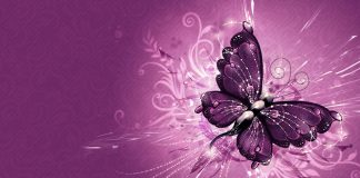 Wallpapers Butterflies Wallpaper Cave.jpg