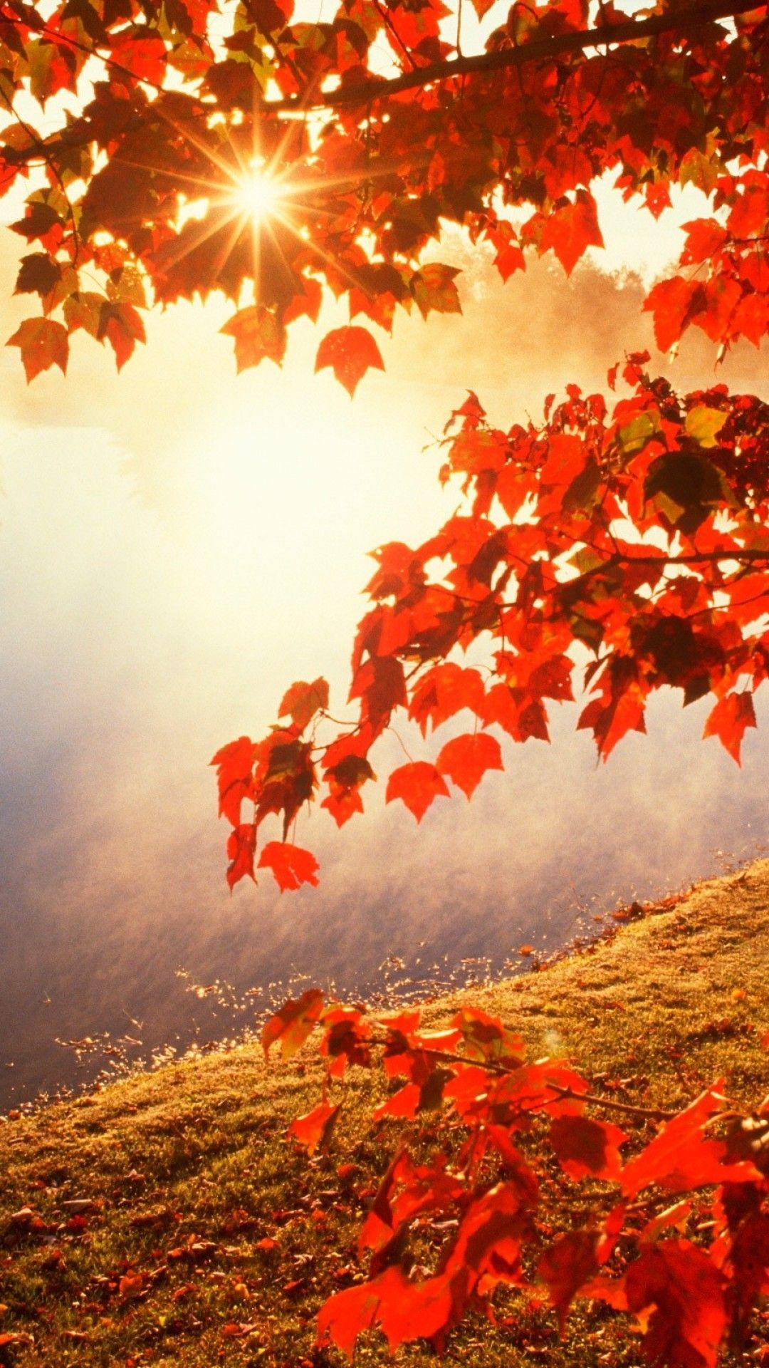 Wallpapers Collection : +37 Best Free HD autumn wallpapers iphone Backgrounds to Download