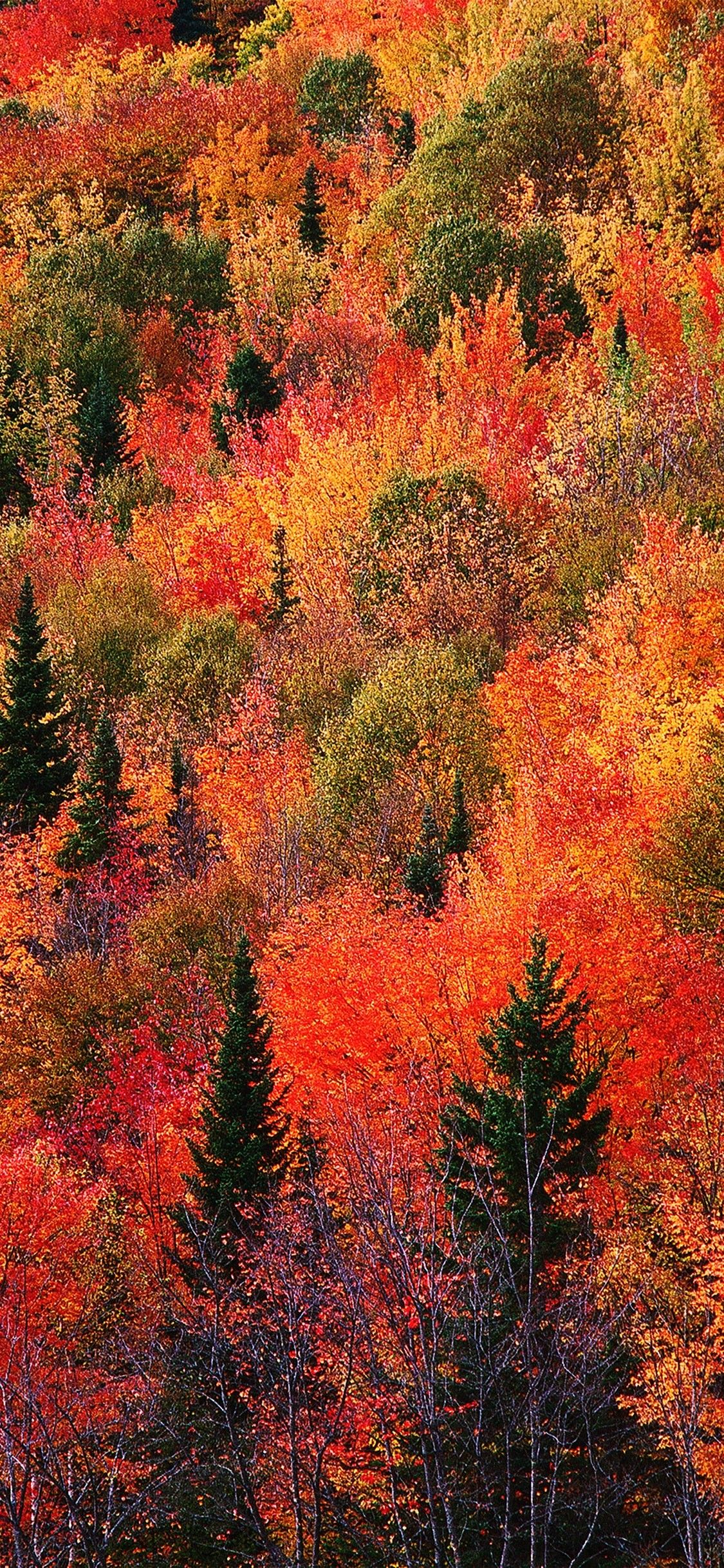 Best Autumn Wallpapers