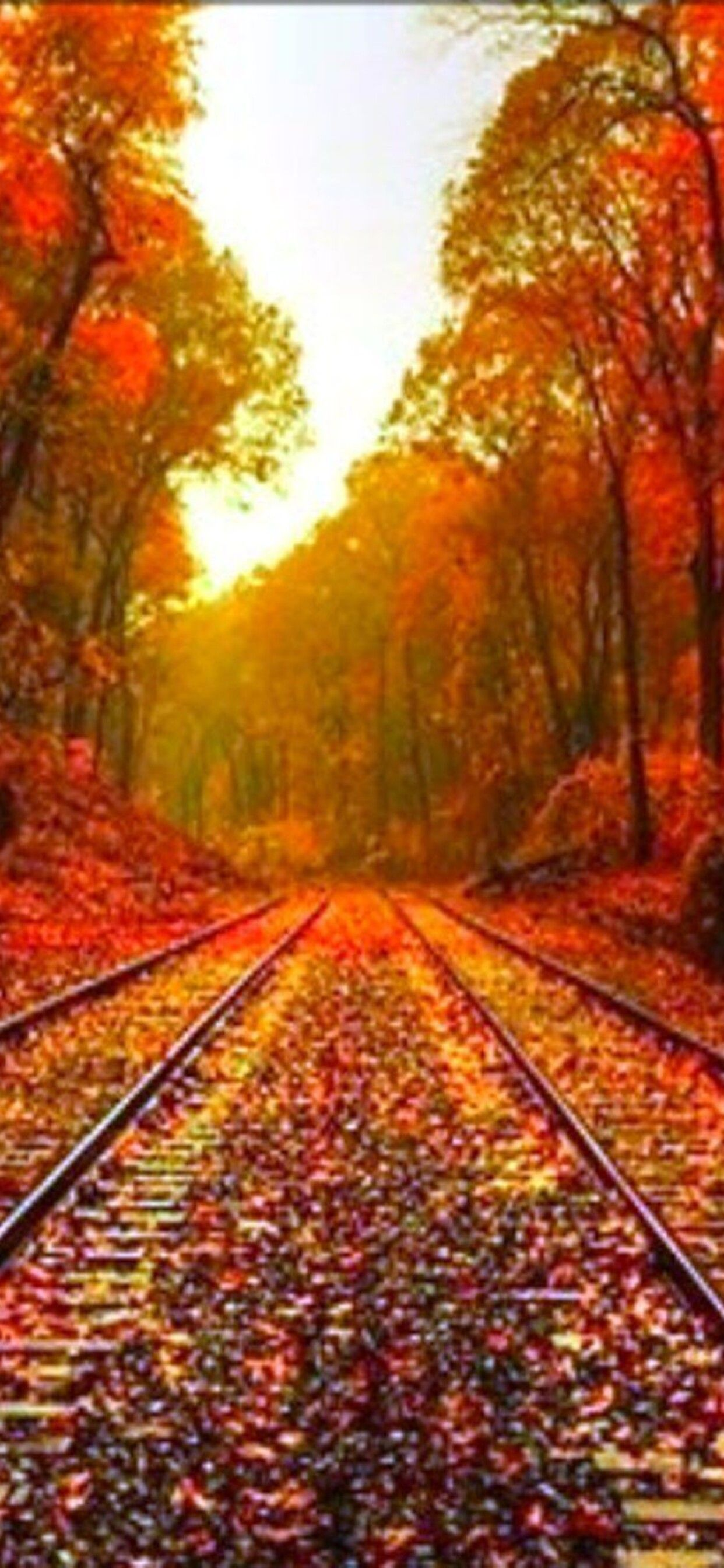 Autumn leaves on the rails