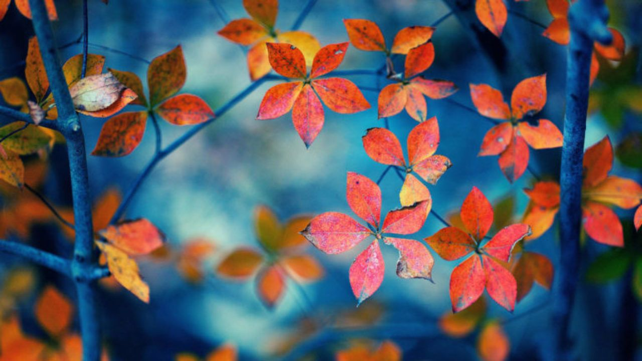 50+ Free Download Full HD Autumn Wallpapers