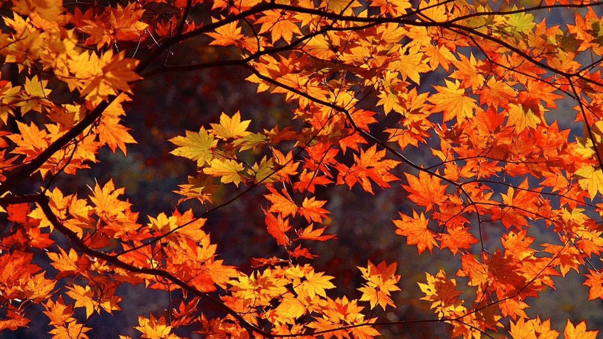 21+ Cute Fall HD Wallpapers