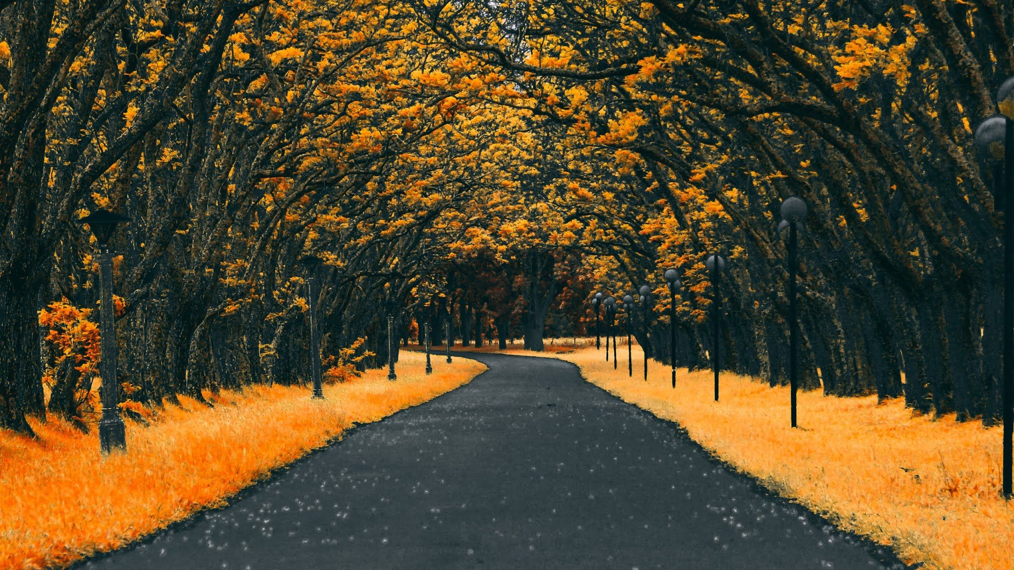 Autumn Road Nature 4k Wallpapers