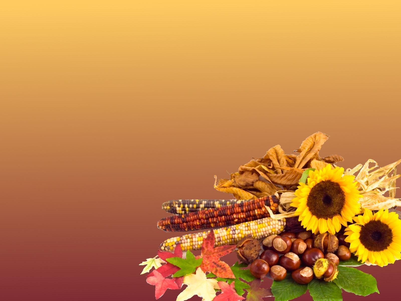 Wallpapers For > Thanksgiving Harvest Wallpapers