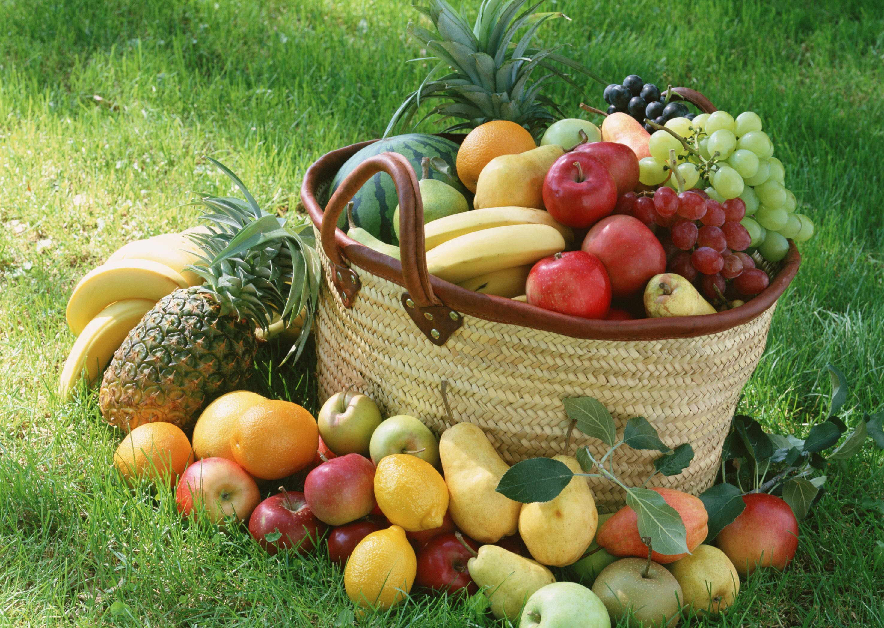 Fruit Basket HD Wallpapers