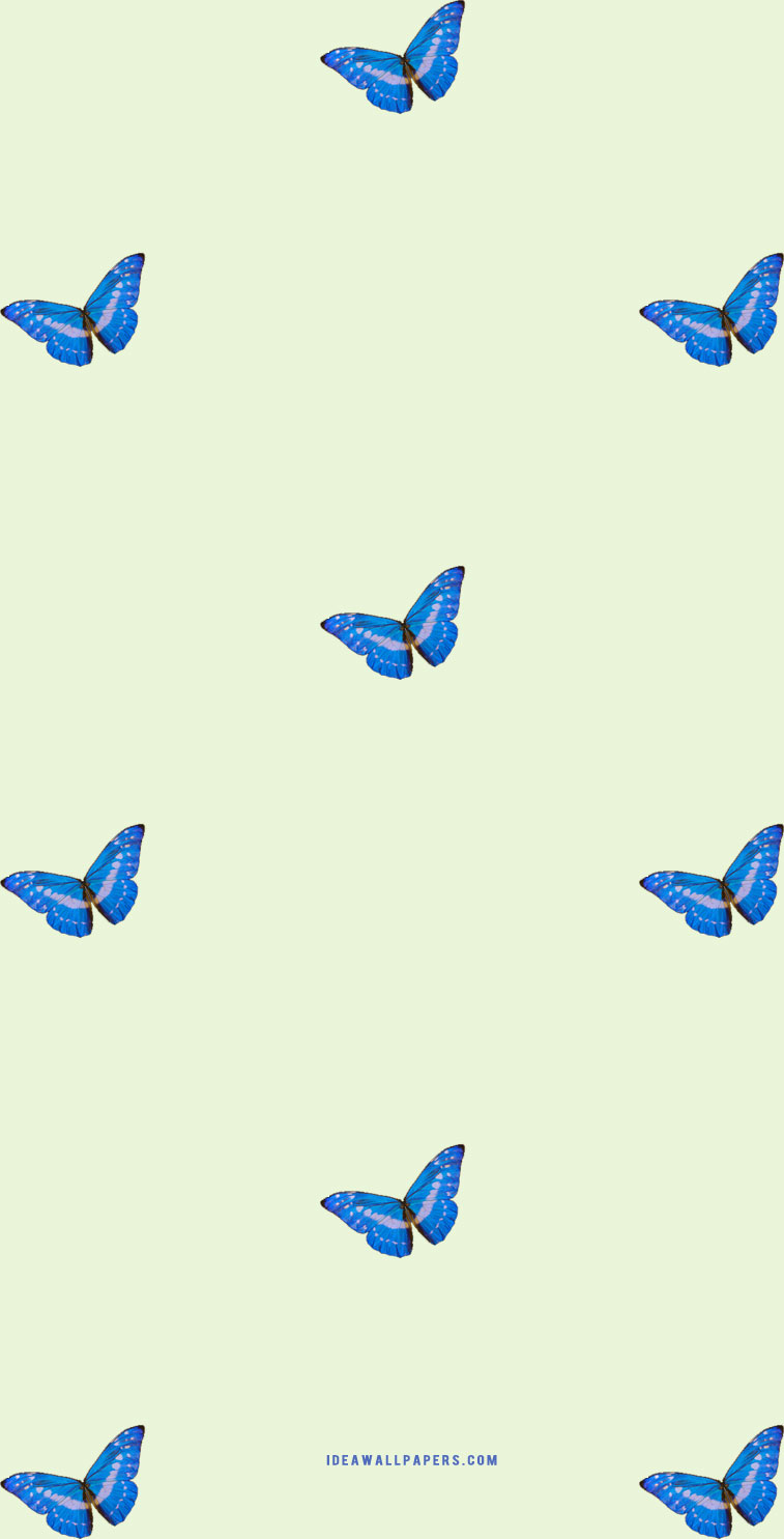 Butterfly on light lime green backgrounds
