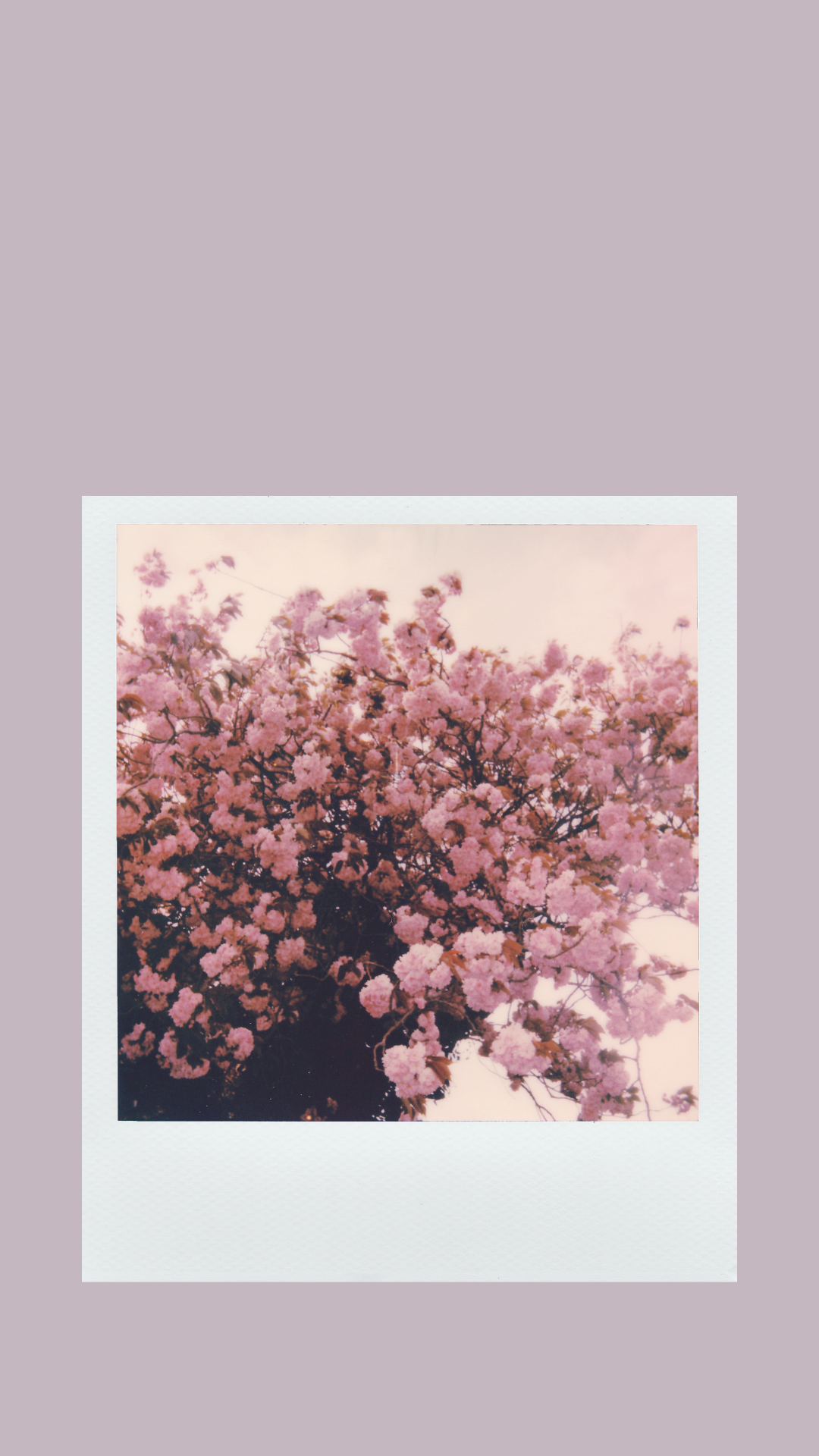 Free Aesthetic Phone Wallpapers for Spring